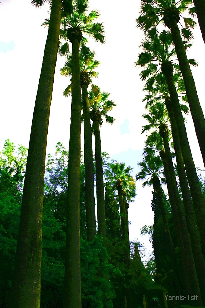 palmtrees by Yannis-Tsif