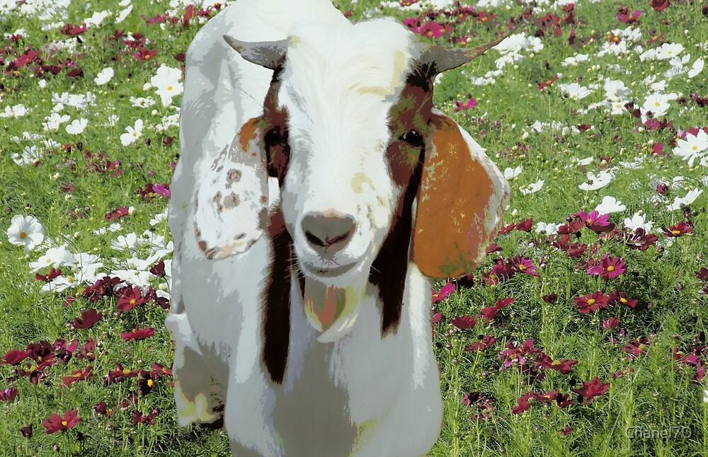 Nilo the Goat by Chanel70