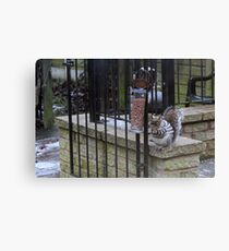 Stereotypical Squirrel Canvas Print