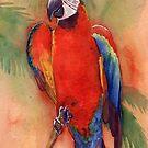 Macaw 1 by Whitney Mattila