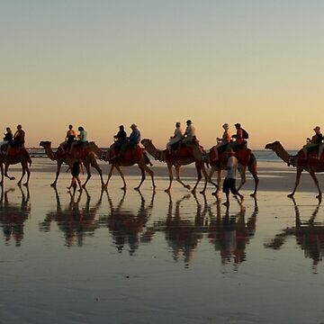 Cable Beach Camel Reflections (View Large) by CassarrArt