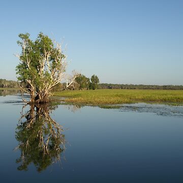 Yellow Water Reflections - Kakadu by CassarrArt
