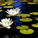 Lilly Pads In Bright Sun by Larry Costales