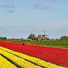 FIELD FLOWER BULBS by RainbowArt