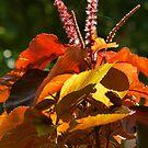 plantas tropicales by Bernhard Matejka