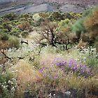The Vegetation of Vulcano by laurabaker