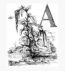 Garden Alphabet Letter A Photographic Print