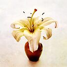 Golden Yellow Lily Still Life by LouiseK