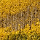 Aspen Golden Harp by Gregory J Summers