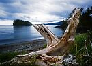 Skidigate Channel in Haida Gwaii by Yukondick