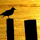 Seagull  by Alberto  DeJesus