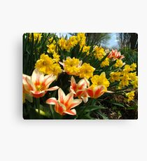 Tulips and Daffs Canvas Print