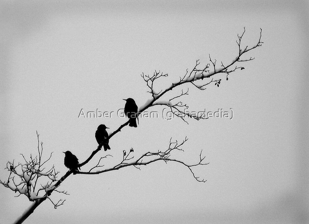 Trio on a Tree by Amber Graham (grahamedia)