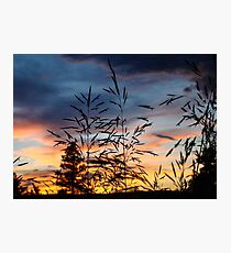 Sunset Silhouettes Nature Shot  Photographic Print