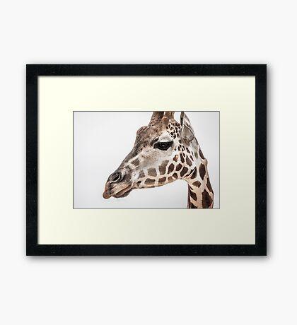 Mr. G. Raff Framed Print
