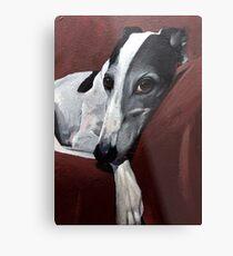 Greyhound.. Metal Print