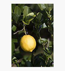 Lemon Yellow Photographic Print