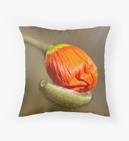 Poppies take off their coats in the sun Throw Pillow