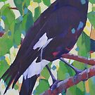 Currawong by Mellissa Read-Devine