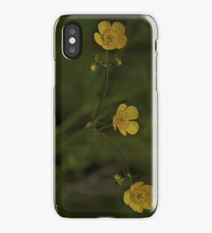 Three Meadow Buttercups - Burntollet Woods, County Derry iPhone Case