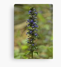 Bugleherb - Burntollet Woods Canvas Print