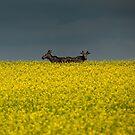 Two Moose by IanMcGregor