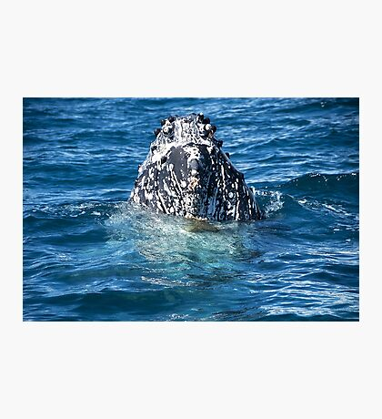 Curious Humpback Whale Photographic Print