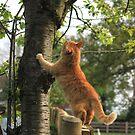 Birdwatching by turniptowers