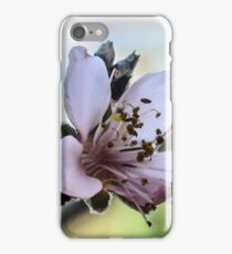 Peach Blossom Close Macro iPhone Case/Skin