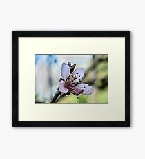 Peach Blossom Close Macro Framed Print
