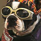 Dog Days! by Heather Friedman
