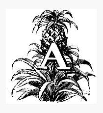 Plant Alphabet Letter A Photographic Print