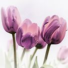 Artistic Tulips by George Lenz