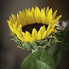 Sunflower of Hope by George Lenz