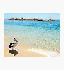 Pelican at Tangalooma Wrecks Photographic Print