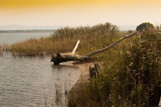 Driftwood On A Reedy Shore. by Raymond J. Marcon