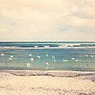 Swan Sea by Paula Belle Flores