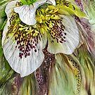Wild Bloom by Carol  Cavalaris