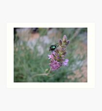 Dawn Visitor - Glowing Insect on Lavender Flower Art Print