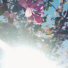 Pinke Blume von Kendra Kantor