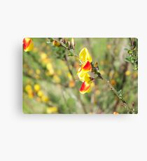 Yellow and Red Flower Canvas Print