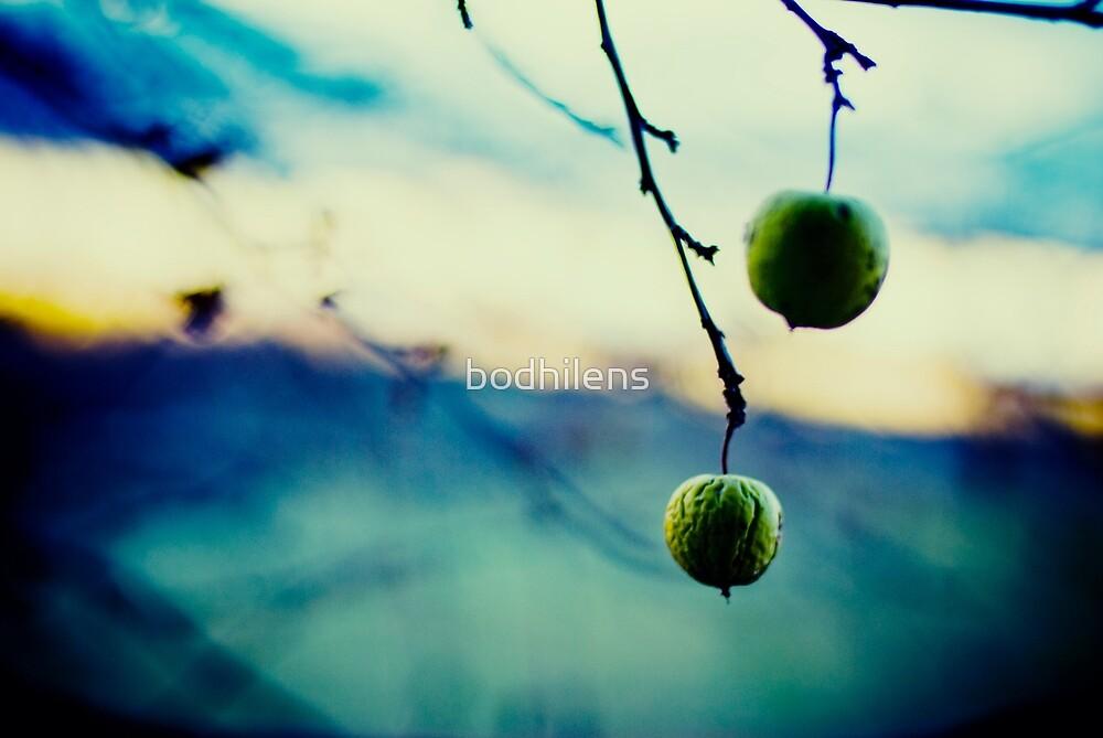 last apples by bodhilens