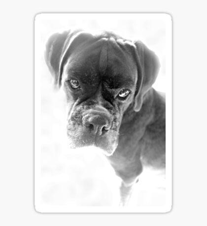 Sie sagen mir, dass ich nicht länger ein Welpe bin - Boxer Dogs Series Sticker