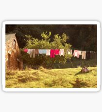 #SERIES - WEGRAAKBOSCH ORGANIC FARM - the washing line Sticker