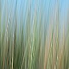 Sway of the Reeds by Barbara Burkhardt