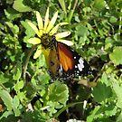 no Change no Butterflys by jonolaf