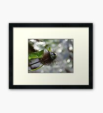 Green Stink Bug Framed Print