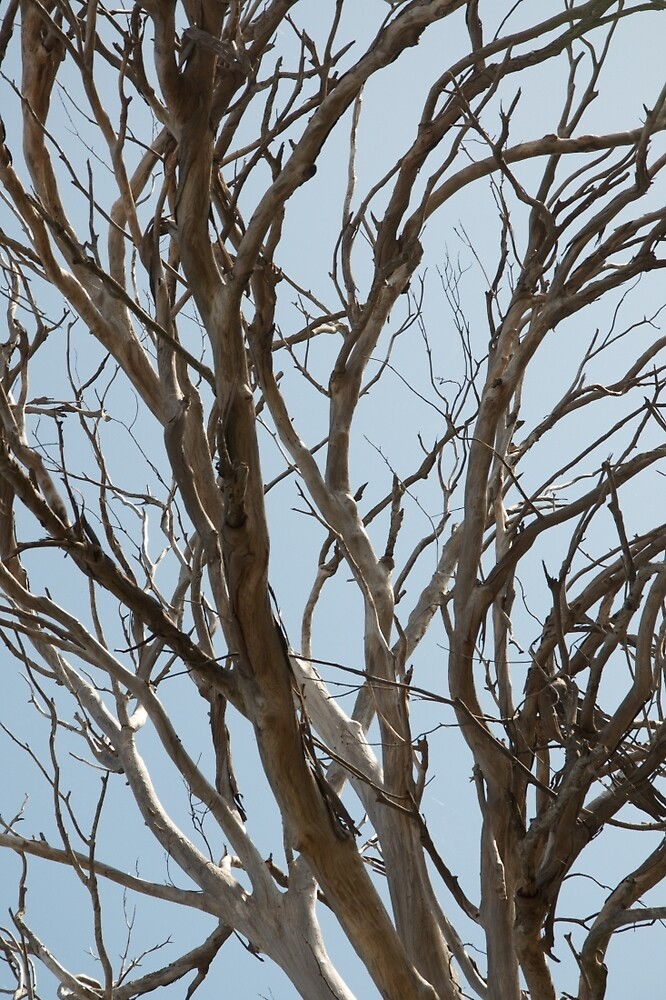Bare tree branches against a pale spring sky by Jack Bridges