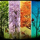 Four Seasons One Picture by purelifephotoss