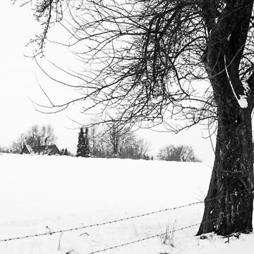 Bare Tree In Snow by PatiDesigns